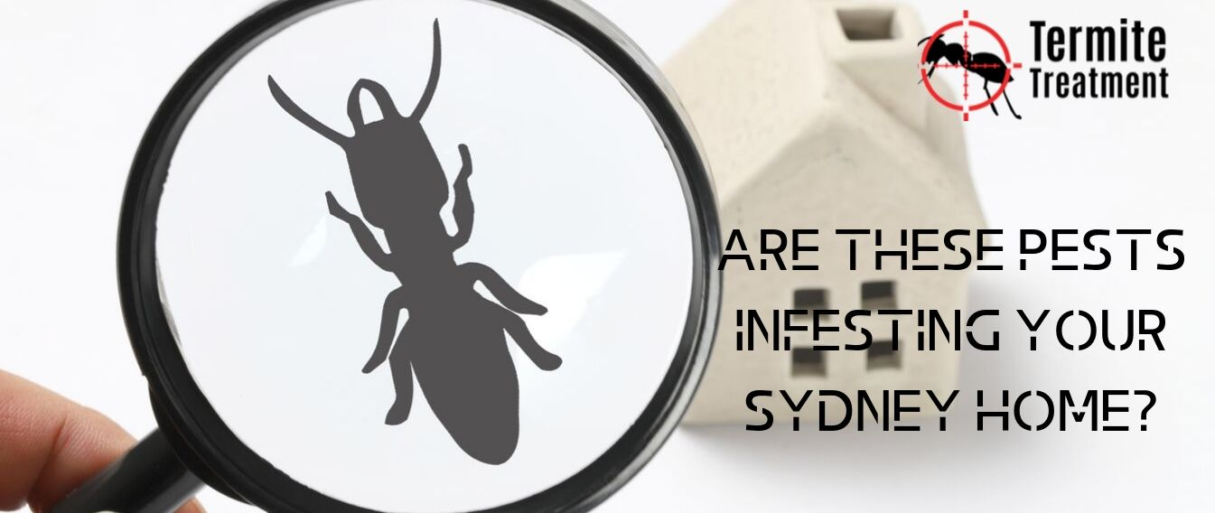 Common Pests and Vermin in Your Sydney House - TermiteTreatmentSydney