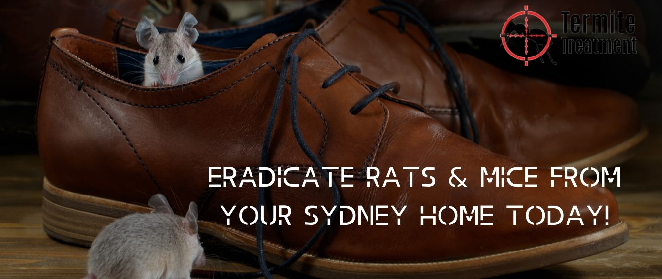 pest inspection service sydney