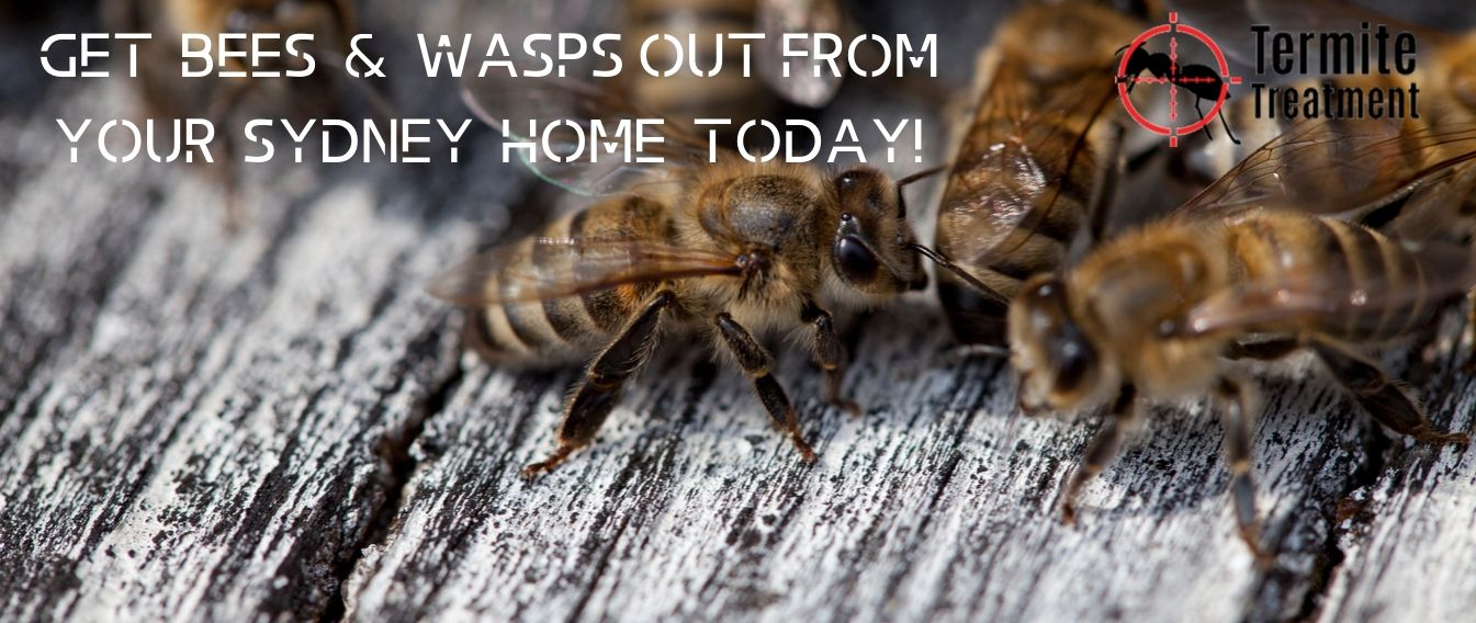 best termite pest inspection sydney
