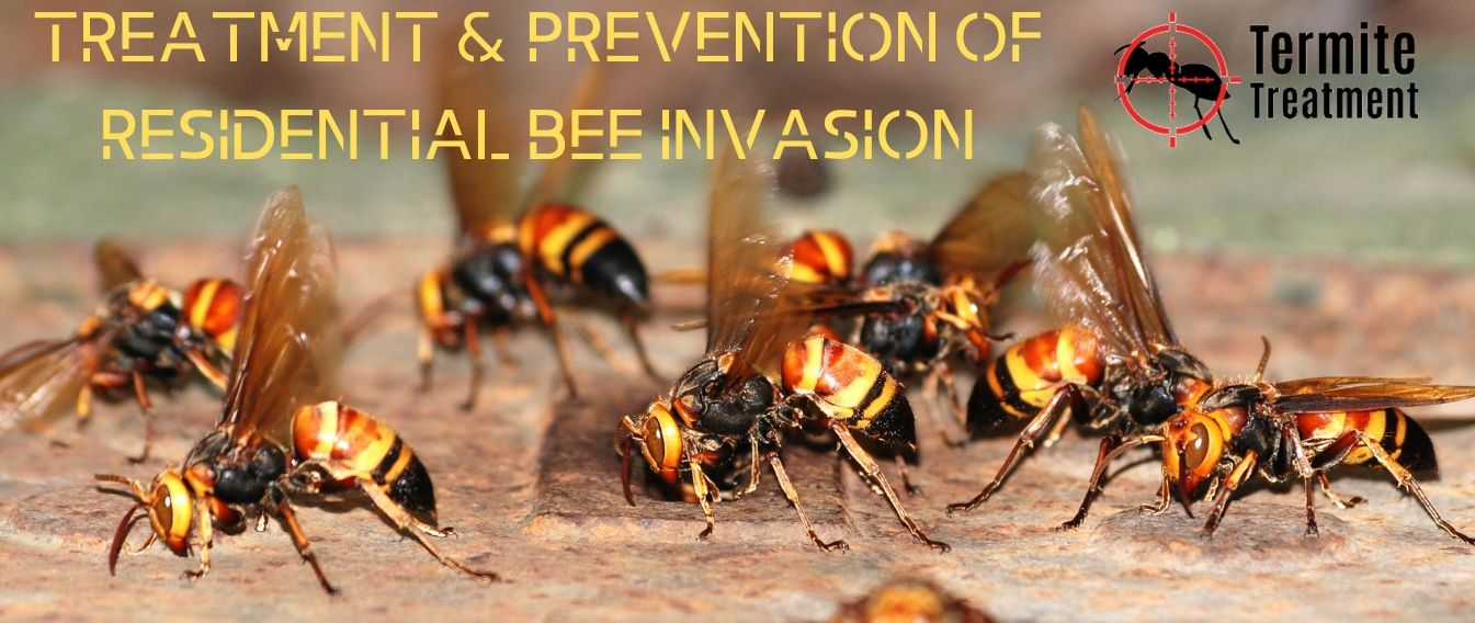 Treatment and Prevention of Residential Bees Sydney