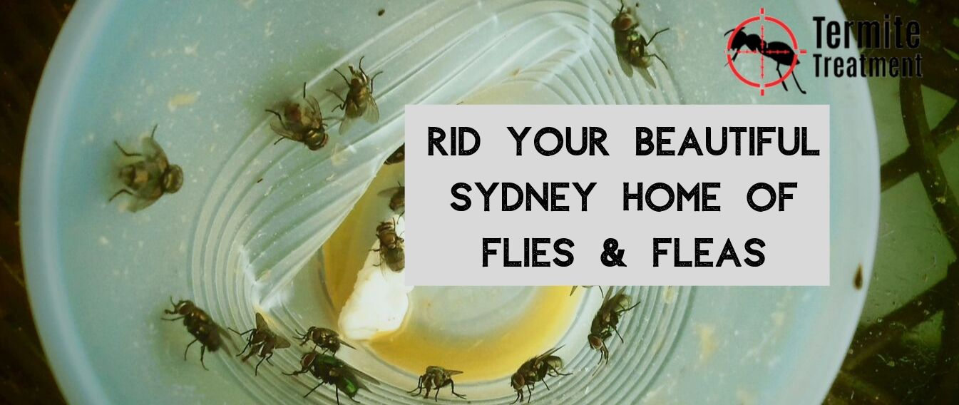 Controlling flies and flea at your residence - TermiteTreatmentSydney