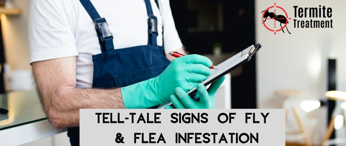 Tell-Tale Signs of a Fly & Flea Infestation in Your Home - TermiteTreatmentSydney