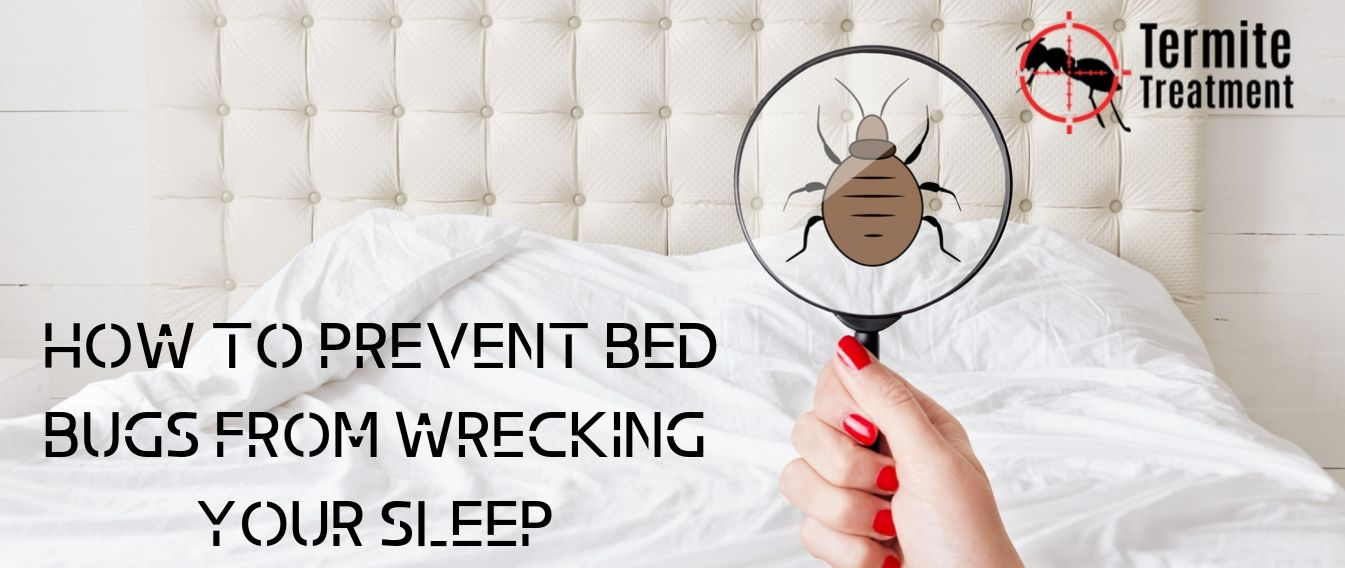What Causes Bed Bugs & How to Prevent Them - TermiteTreatmentSydney