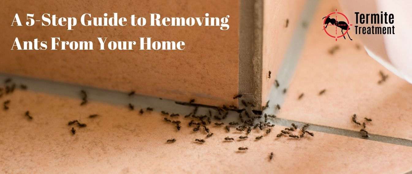 A 5-Step Guide to Removing Ants From Your Home
