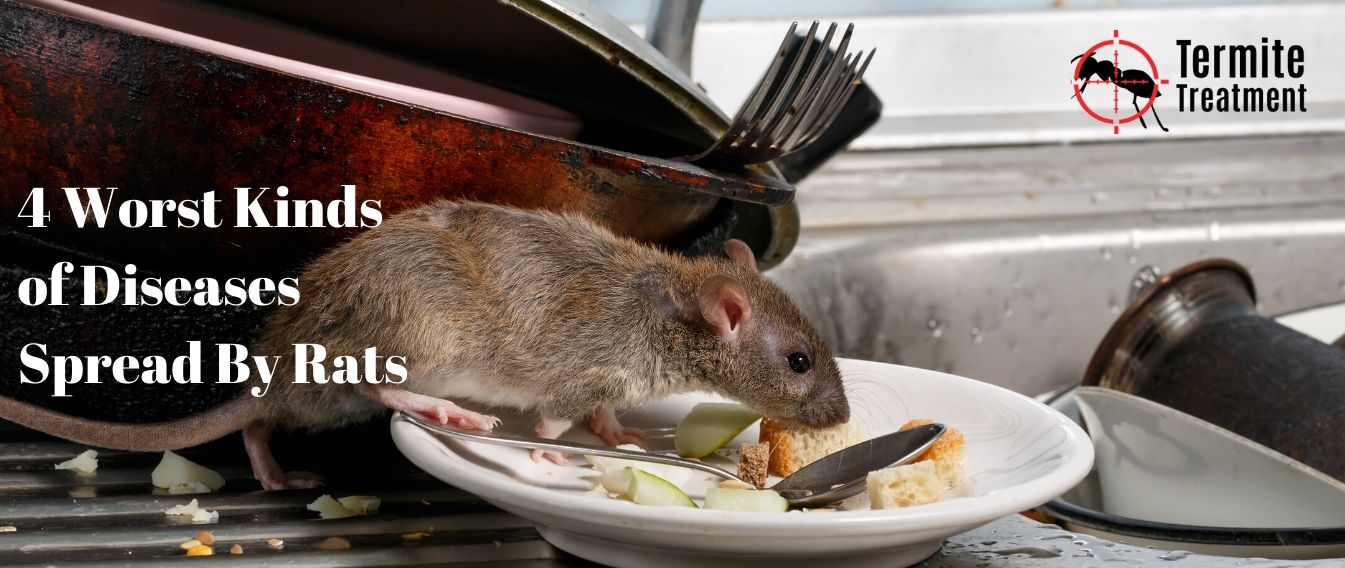 4 Worst Kinds of Diseases Spread By Rats in Sydney