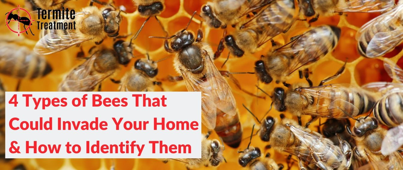 4 Types of Bees That Could Invade Your Home & How to Identify Them in Sydney