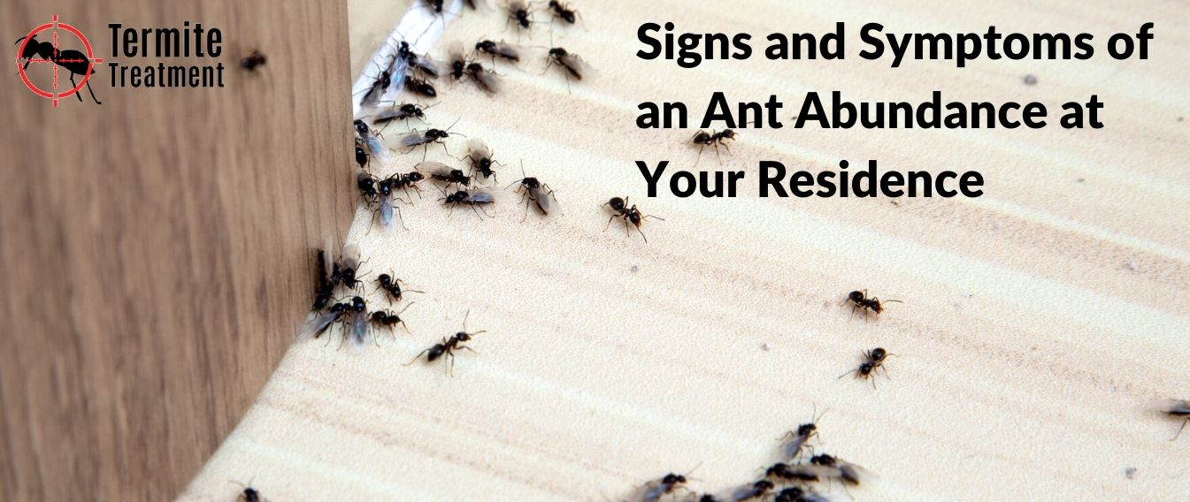 Signs and Symptoms of an Ant Abundance at Your Residence in Sydney