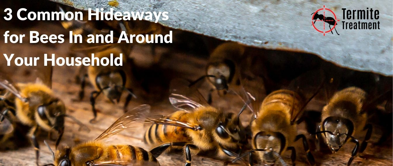 3 Common Hideaways for Bees In and Around Your Household in Sydney