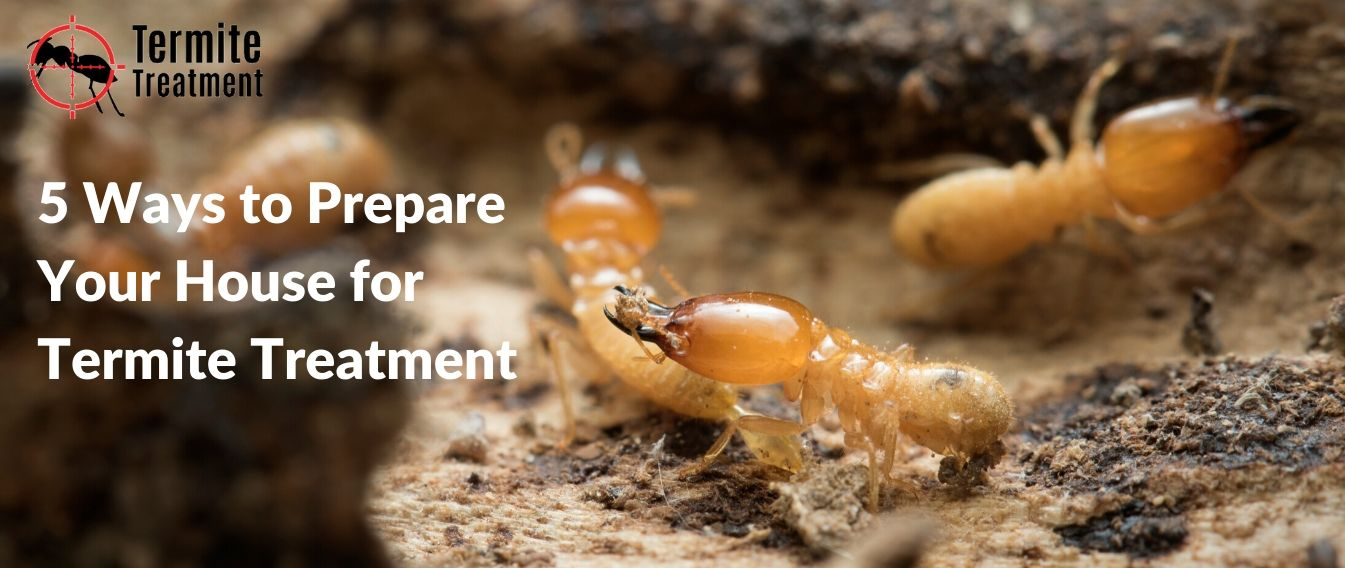 5 Ways to Prepare Your House for Termite Treatment in Sydney